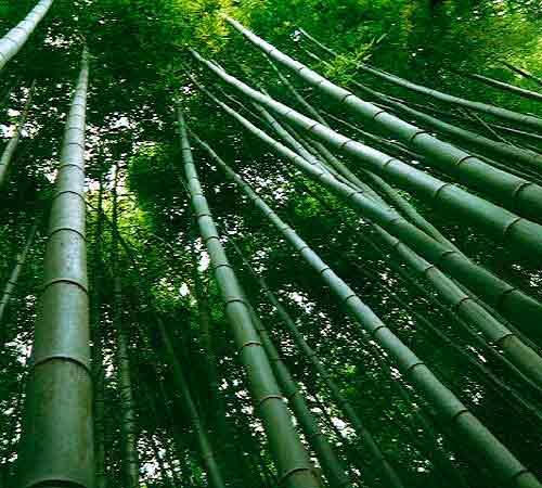 Root Wooden Sunglasses Nuestras Maderas Naturales